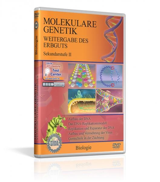 Genetik - Molekulare Genetik - Weitergabe des Erbguts
