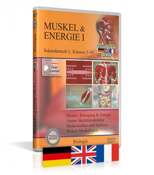 Muskel & Energie I - Trilingual