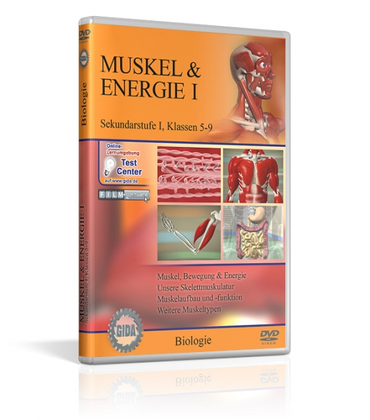 Muskel & Energie I