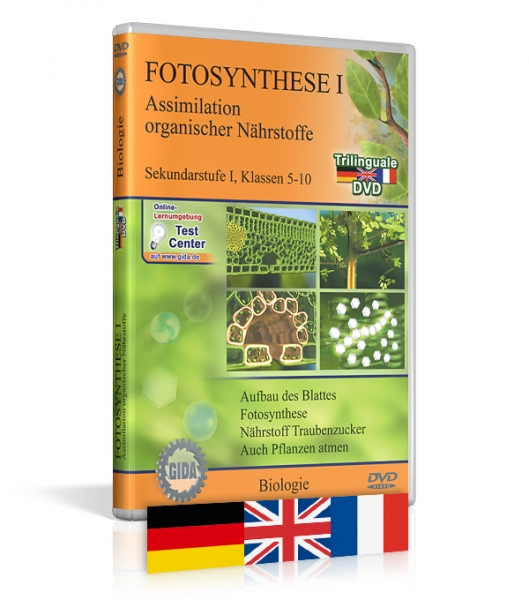Fotosynthese I - Trilingual