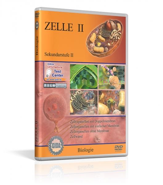 Zelle II