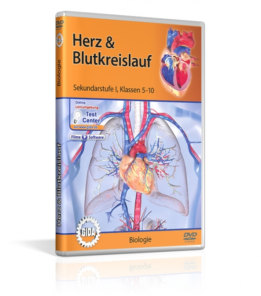 Herz & Blutkreislauf