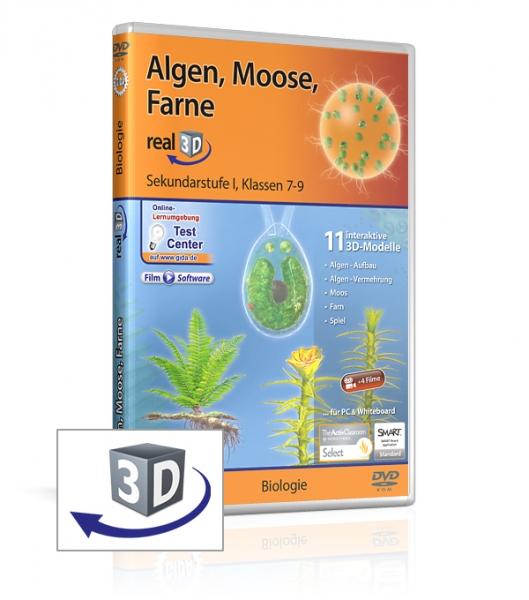 Algen, Moose, Farne