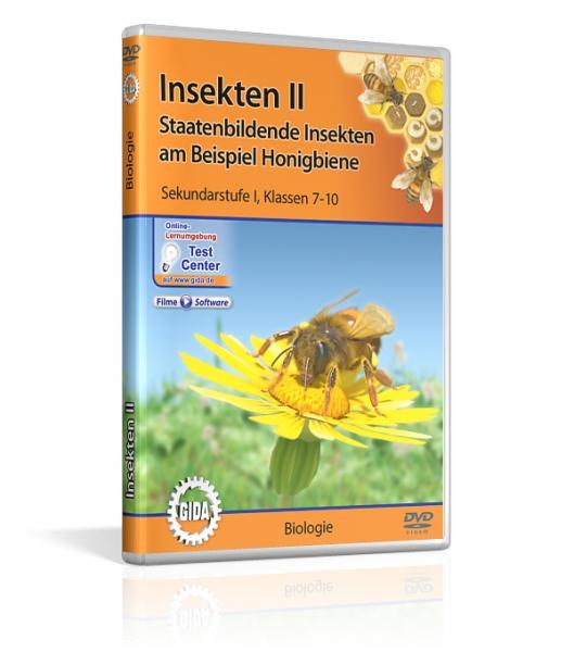Insekten II - Staatenbildende Insekten am Beispiel Honigbiene
