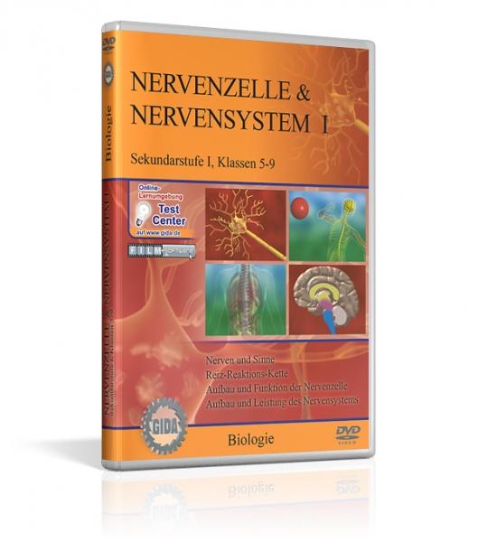 Nervenzelle & Nervensystem I | Filme | Biologie | Fachbereiche | GIDA