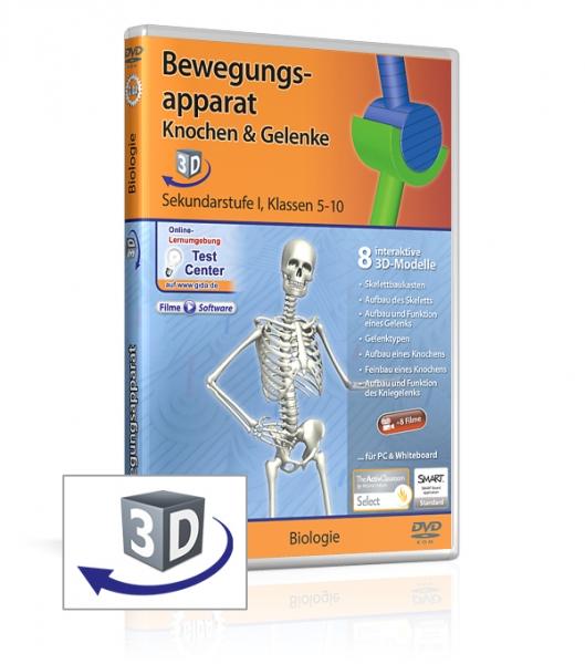 Bewegungsapparat - Knochen & Gelenke