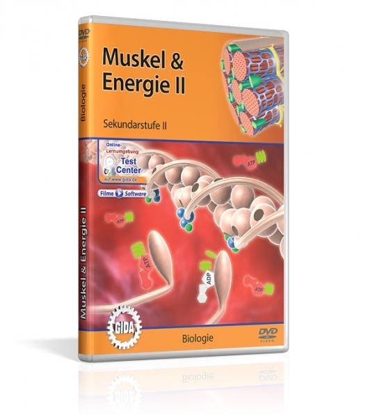 Muskel & Energie II
