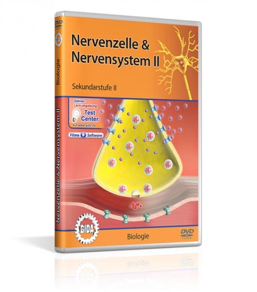 Nervenzelle & Nervensystem II