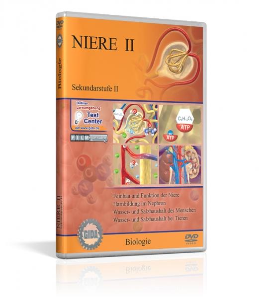 Niere II