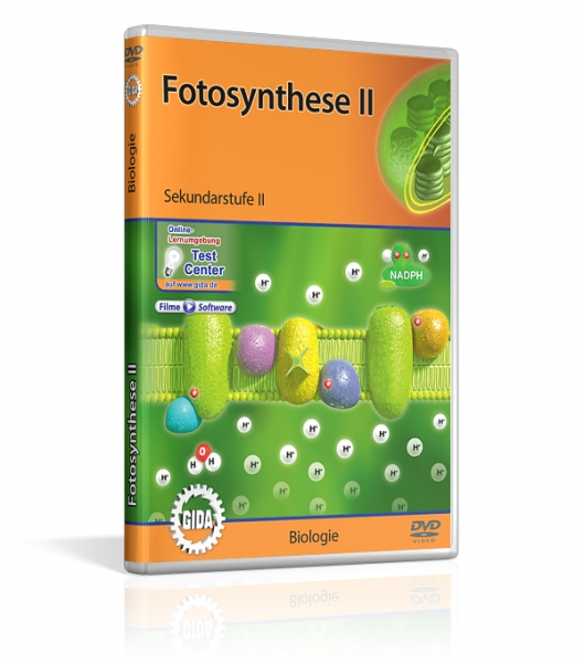 Fotosynthese II