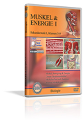 Muskel & Energie I - Schulfilm (DVD)