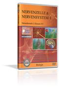 Nervenzelle & Nervensystem I - Schulfilm (DVD)