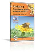 Insekten II - Staatenbildende Insekten am Beispiel Honigbiene - Schulfilm (DVD)