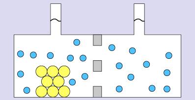 BIO-DVD030 – Transportmechanismen Osmose und Diffusion