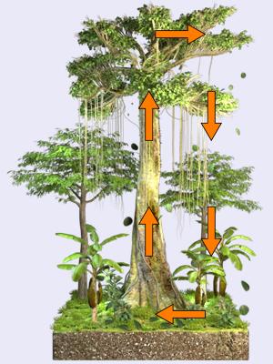 geo dvd022 landwirtschaft i tropischer regenwald n hrstoffkreislauf. Black Bedroom Furniture Sets. Home Design Ideas